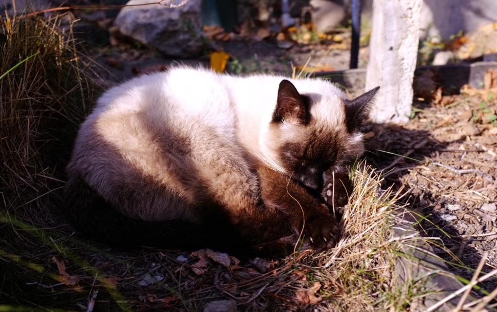 Солнечный кот - фото Наталия Попова - Профессиональный Художник и Профессиональный Флорист 2019 год