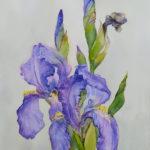 Ирисы вариант 2 - Картина Акварель А4 Написана Наталией Поповой - Профессиональным Художником в 2020 году
