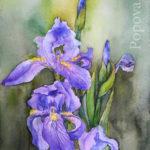 Ирисы вариант 4 - Картина Акварель А4 Написана Наталией Поповой - Профессиональным Художником в 2020 году